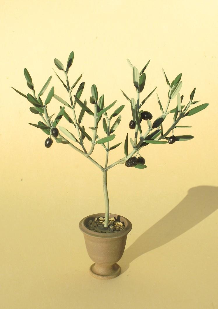 l 39 olivier forg oliviers en pots. Black Bedroom Furniture Sets. Home Design Ideas