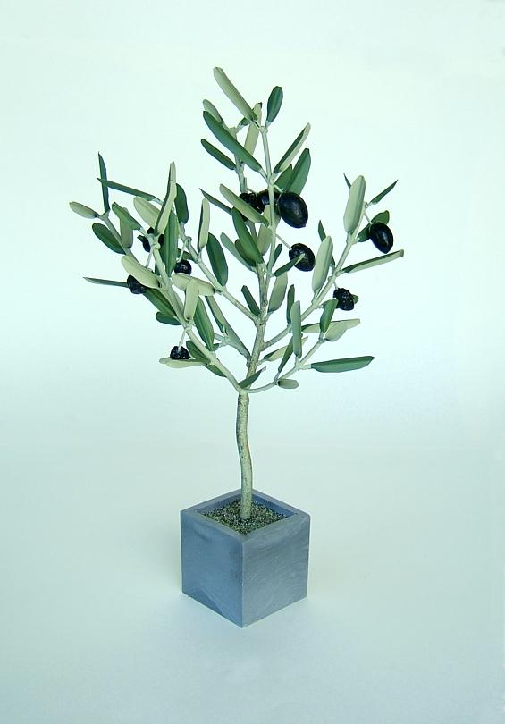 l olivier forg 233 oliviers en pots